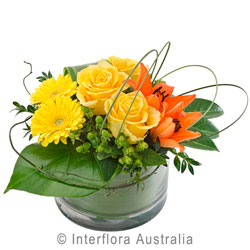 Buy Rhapsody Flowers, Delivered in Brisbane
